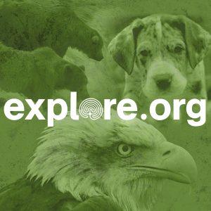 Explore.org